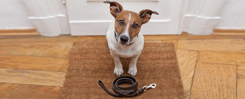 Lezing probleemgedrag hond 2019